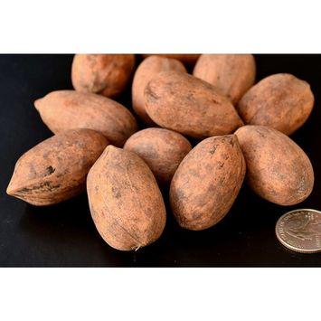 Crop 2016 Texas Pecans Inshell, Organic, 12 Oz.