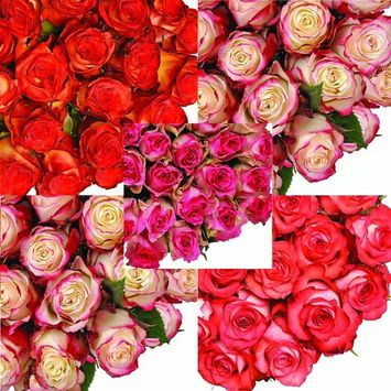 Natural Fresh Flowers - Assorted Bicolor Roses, 16
